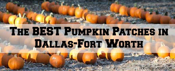 the best pumpkin patches in the dallas fort worth metroplex dallas halloween - Halloween In Fort Worth