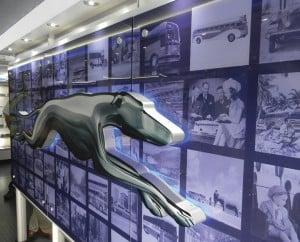 Greyhound Museum